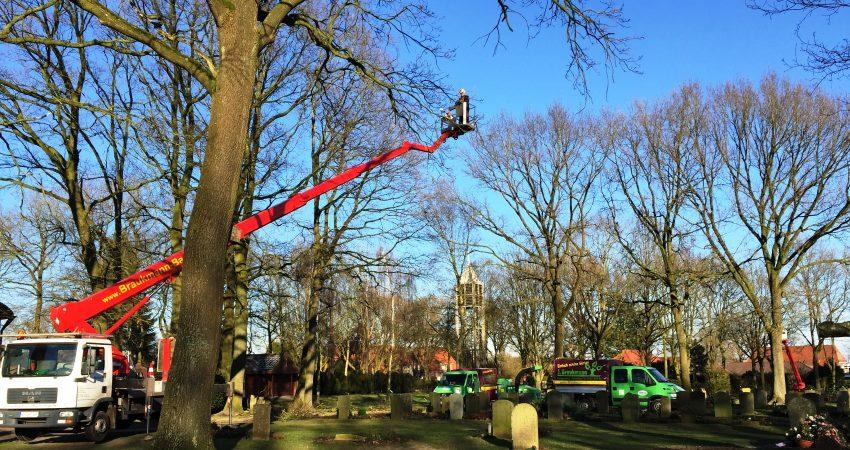 Baumpflege auf dem Friedhof mit zwei Hubsteigern