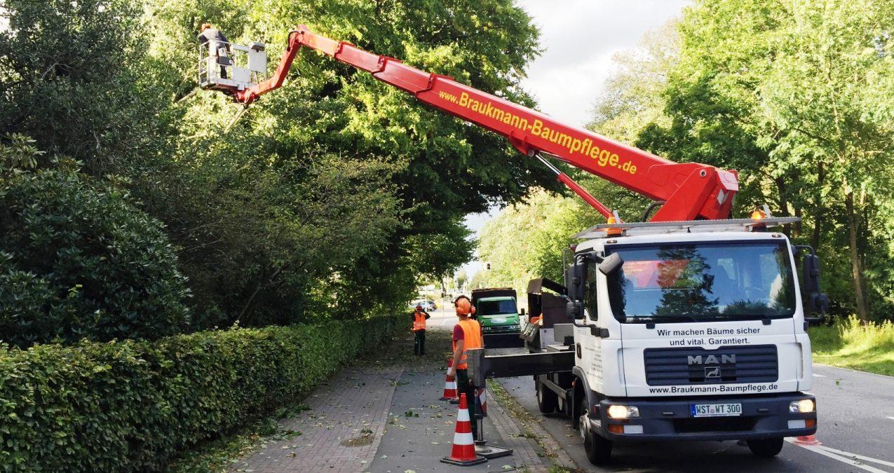 Baumpflege an der Straße mit Hubsteiger