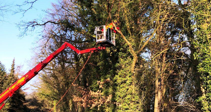 das Baumpflege- Team von Braukmann Baumpflege hat das AS- BAUM II- Zertifikat