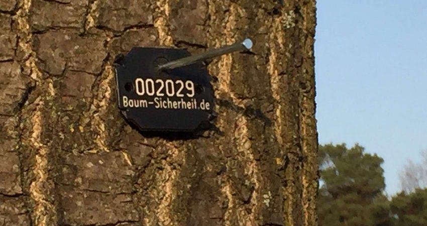 Baumkontrolle.Wir können ganze Bestände zusammenfassen mit schriftlichem Nachweis und einer Codierung vor Ort. Bei Einzelbäumen vergeben wir z.B. eine dauerhafte Identifizierung durch eine mitwachsene Baumnummer.