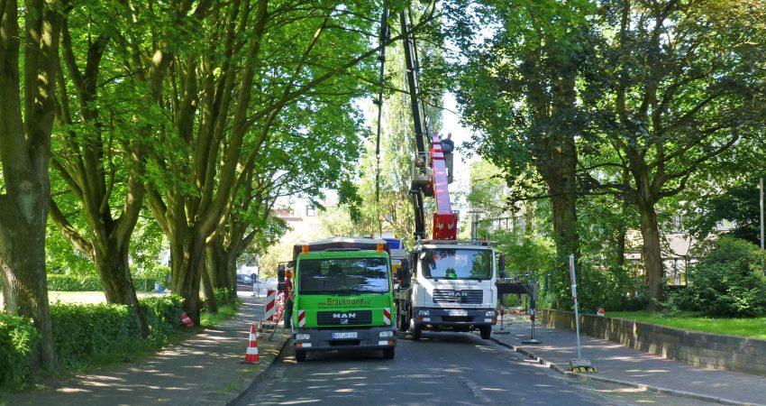 Abtragen und fällen von nicht verkehrssicheren Bäumen mit der Hubbühneund dem LKW Steiger