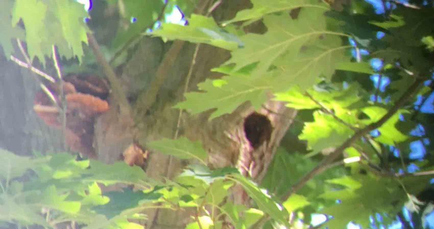 iele Bäume und Gehölze dienen Vogelarten, Fledermäusen und Insekten als wichtigen Lebensraum.