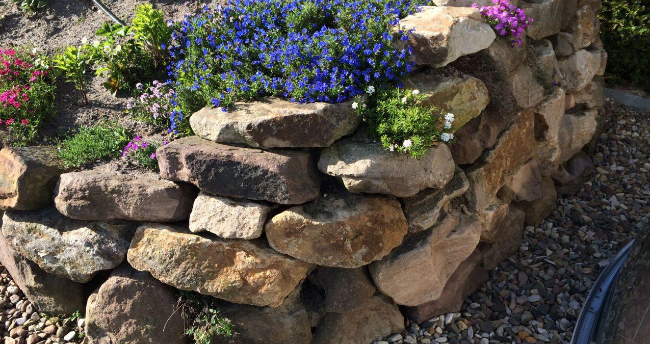 Trockenmauern verschönern jeden Garten mit bluehenden Stauden