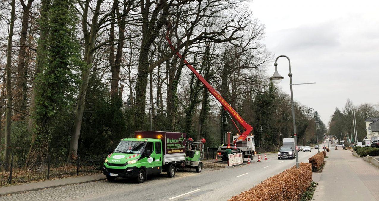 Baumarbeiten-im-Rastede-Oldenburger-Strasse
