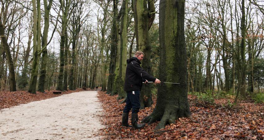 Erstellen von Baumdiagnosen und Baumkataster durch Dipl. Ing. Kevin Braukmann