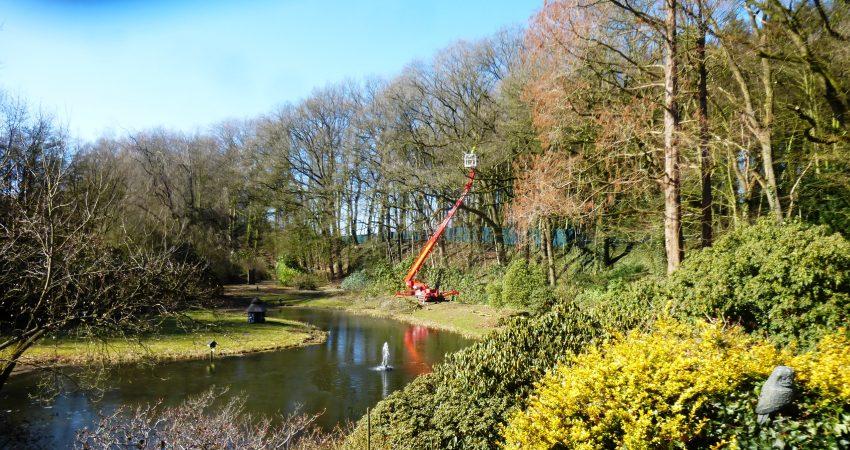Baumschnittarbeiten Braukmann-Baumpflege mit Hubsteiger