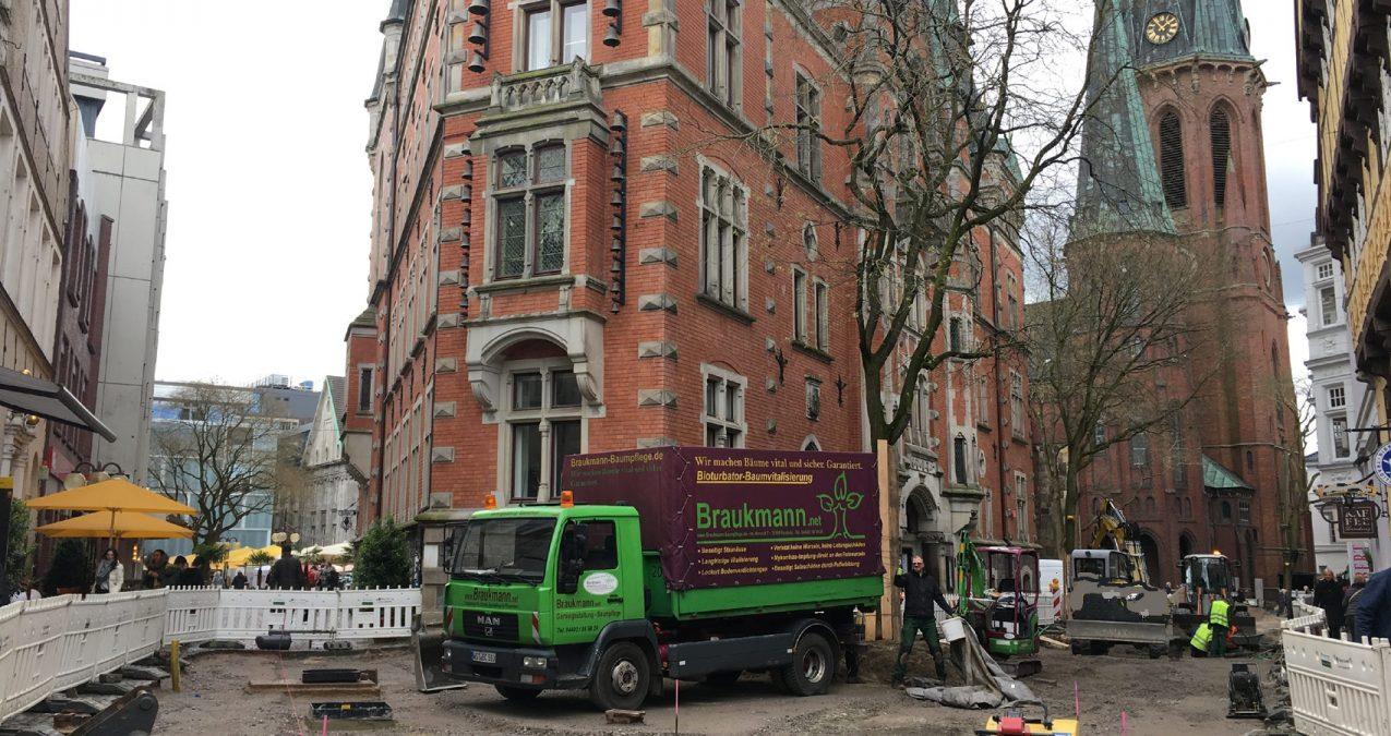 Baumpflege- Bioturbieren beim Rathaus Oldenburg