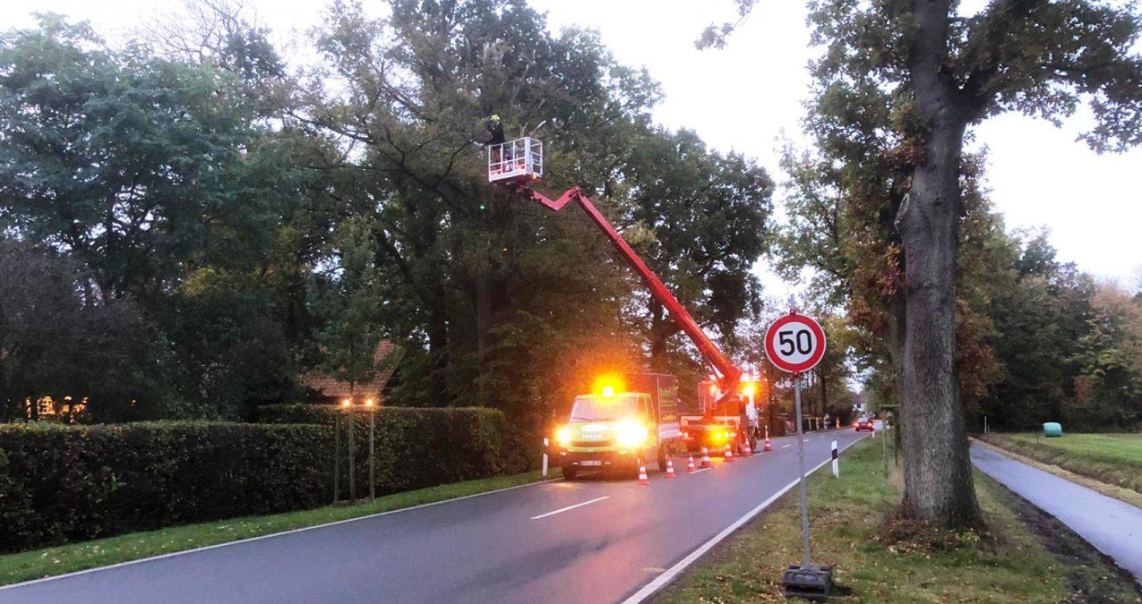 Braukmann-Baumpflege-an-der-Bundesstrasse
