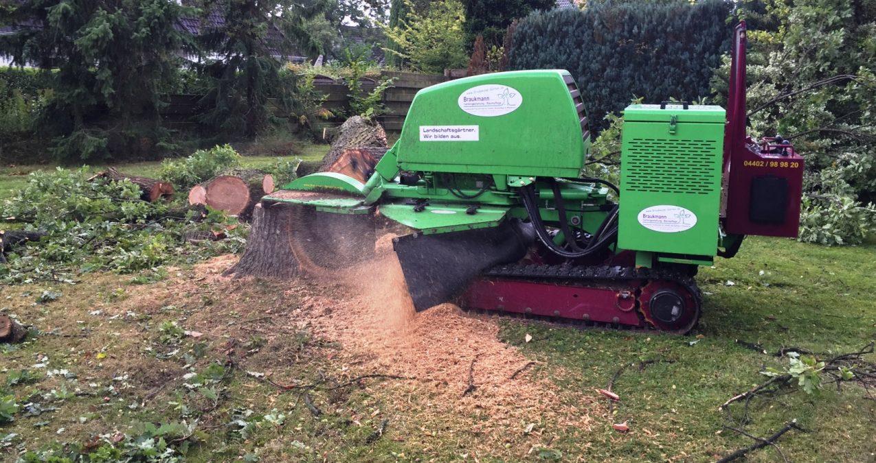 Braukmann Maschinen im Einsatz Stubbenfräse