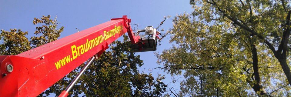 Wir sind ihr kompetenter Partner bei der Baumpflege