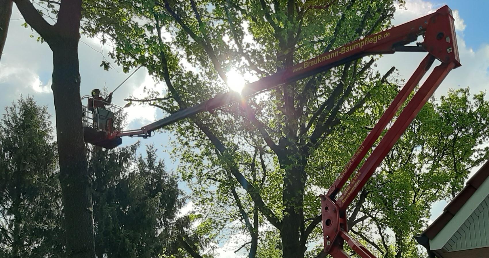 Baumpflege- Baumschnitt mit der Hubarbeitsbühne